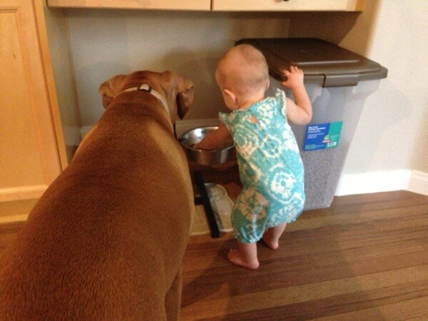 Playing in the dog's food